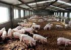 养猪场如何保温