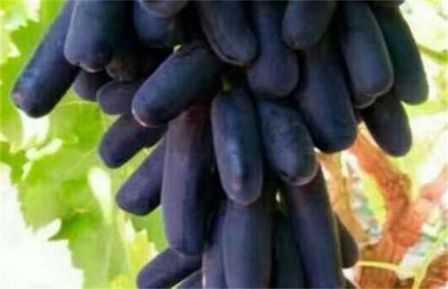 蓝宝石多少钱一斤