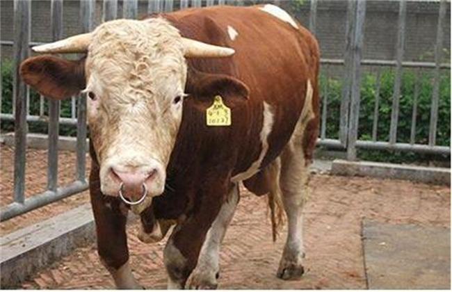 怎么分辨牛生病没有