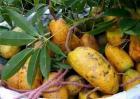 野木瓜的种植技术