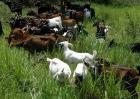 如何降低养羊的成本