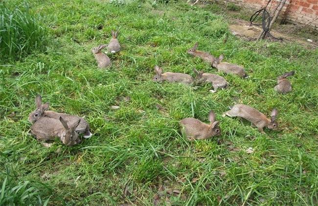 野兔冬季养殖管理要点