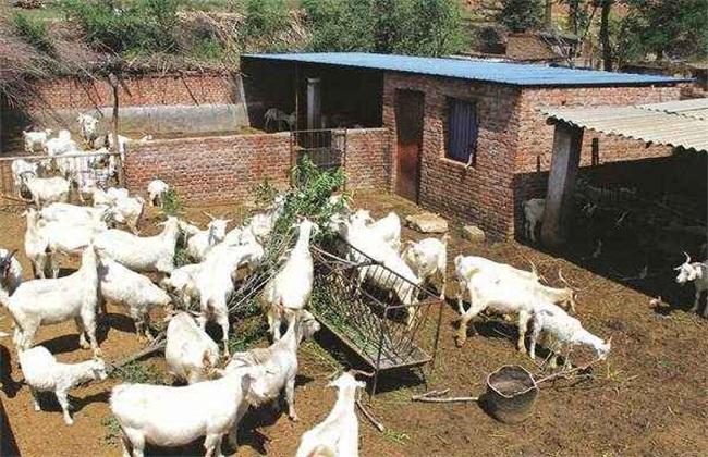 冬季 养羊 注意事项