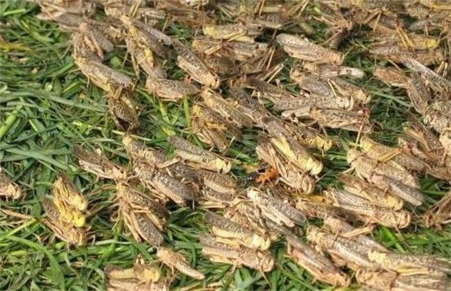 特色昆虫培育
