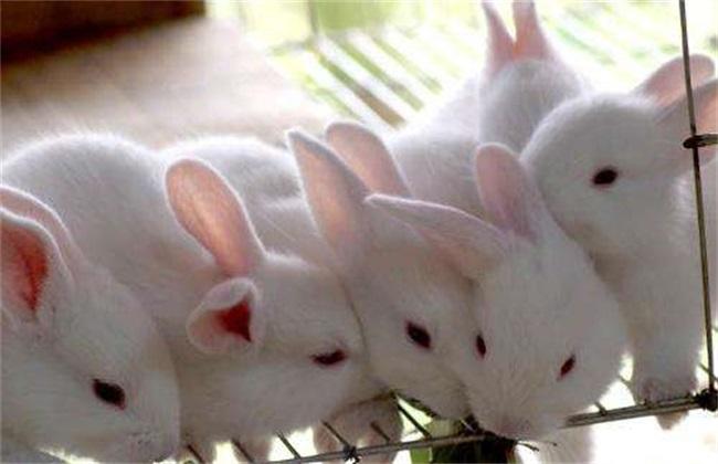冬季獭兔饲养管理技术