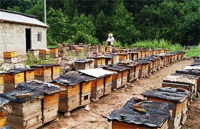 蜜蜂养殖赚钱吗