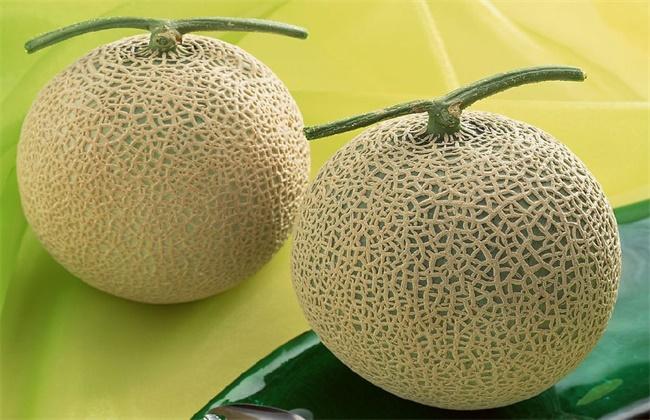 网纹瓜和哈密瓜的区别