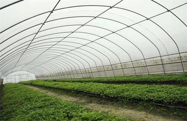 大棚蔬菜 冬季浇水 注意事项
