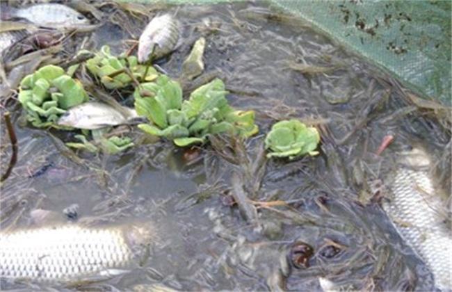 养殖哪些水产品有前途