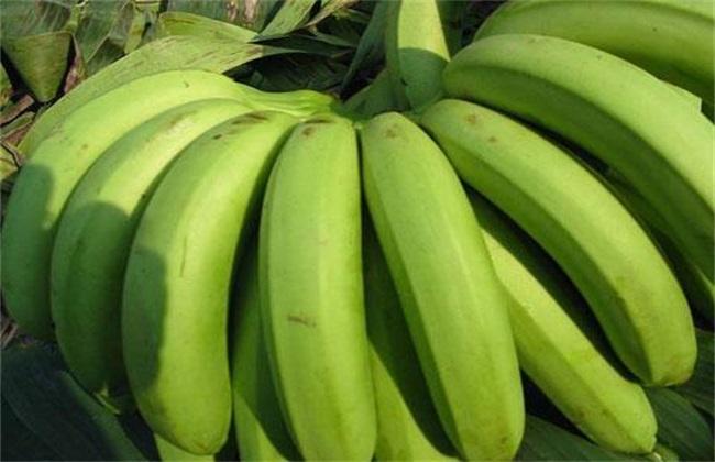 香蕉价格多少钱一斤