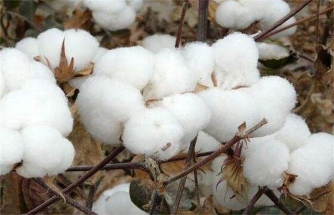 棉花价格多少钱一斤