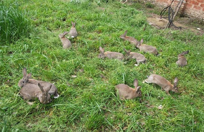 春季养兔注意事项