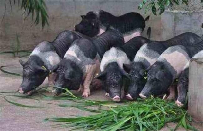猪场设备不完善