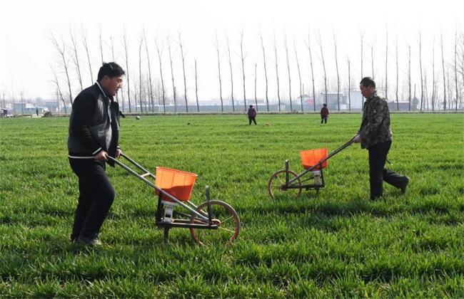 小麦冬季施肥注意事项
