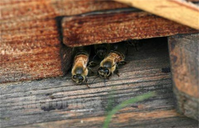 蜂箱死蜂出现的原因