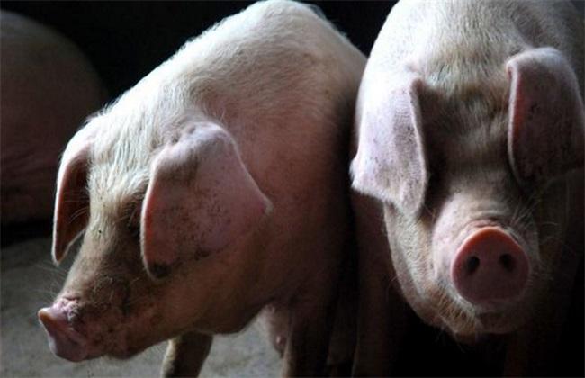 如何降低养猪成本