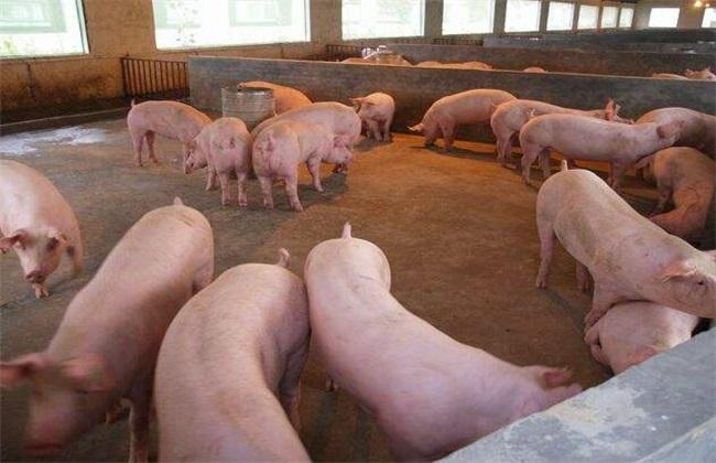 生猪养殖经济效益低的原因