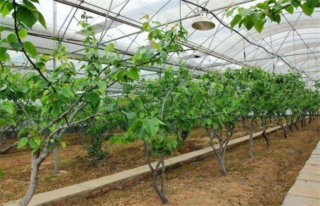 如何提高 温室大棚 种植效益