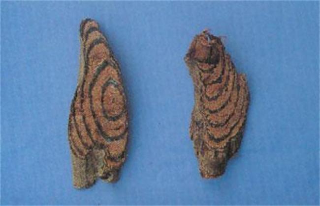 大血藤和鸡血藤的区别