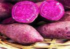 紫薯种植赚钱吗