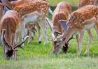 养殖梅花鹿需要什么条件