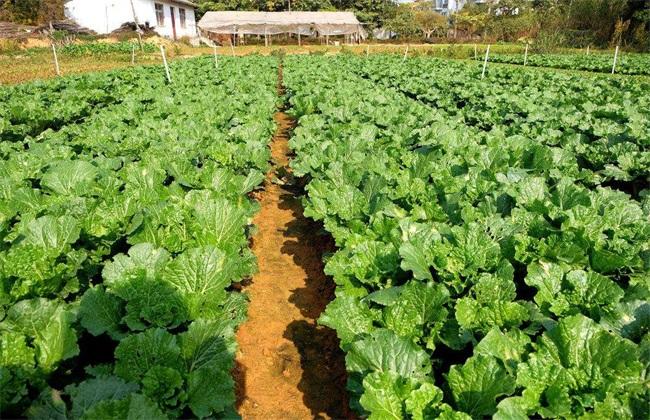 2019年种植蔬菜还能赚钱吗