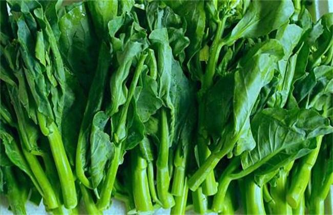 南方适合种植什么蔬菜