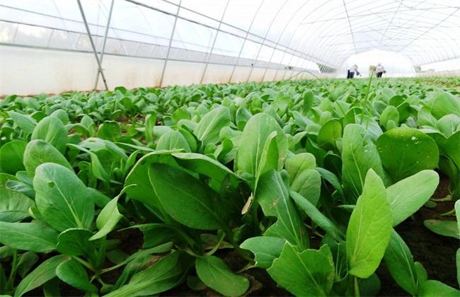 2019种植蔬菜要考虑的因素