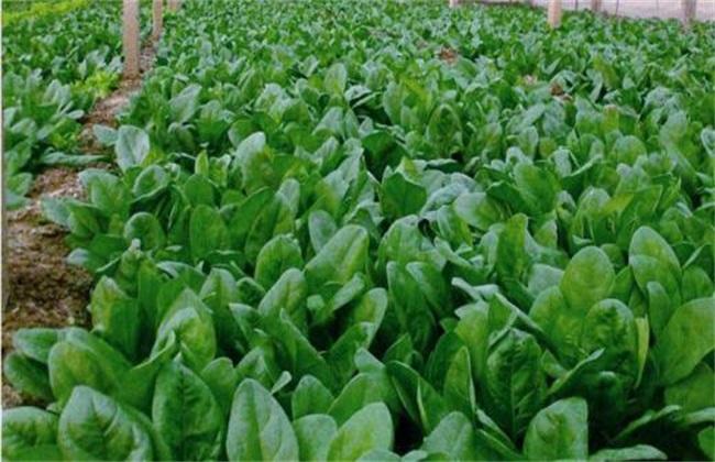 2019种植前景好的蔬菜