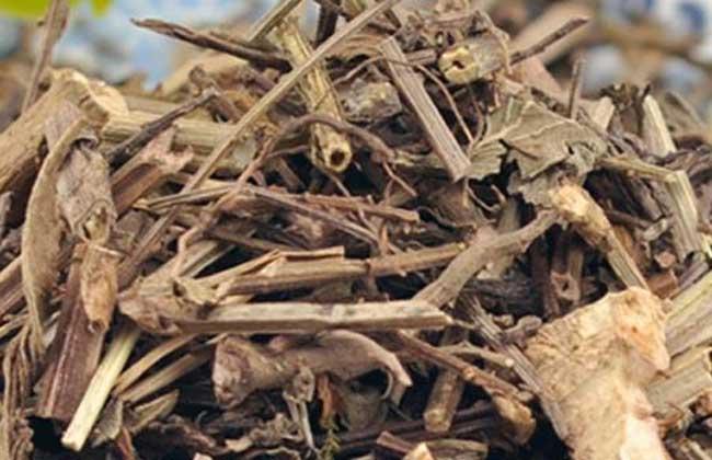 马鞭草多少钱一斤