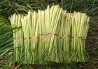 香茅草多少钱一斤