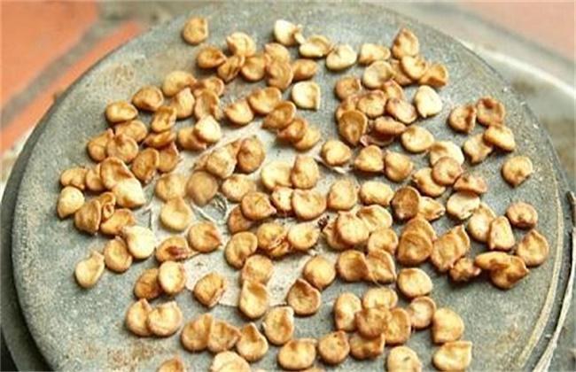 辣椒种子的催芽方法