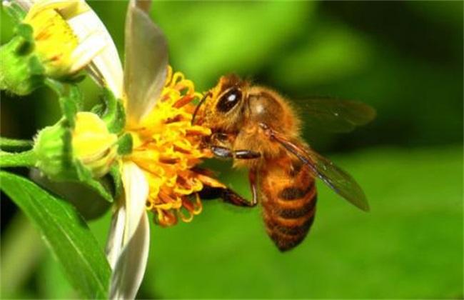 防止蜂王产卵