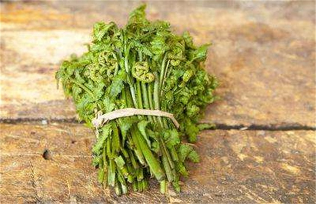 蕨菜多少钱一斤