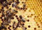 2019养蜜蜂投资与收益怎么样