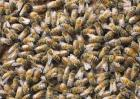什么样的地方适合养蜜蜂