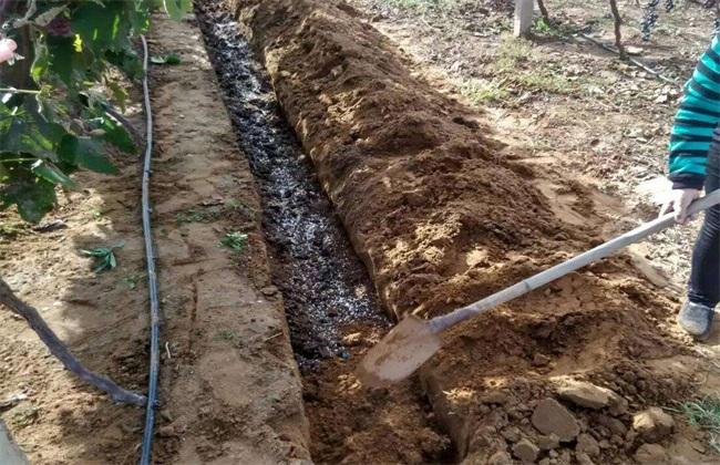 葡萄 秋施基肥 有什么好处