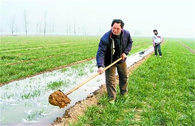 小麦冬灌注意事项