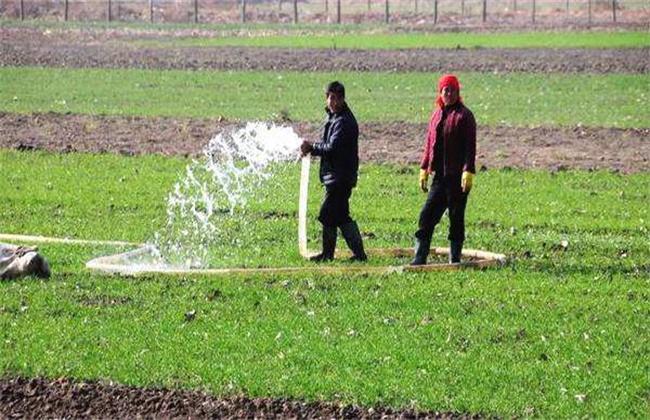小麦越冬期如何管理