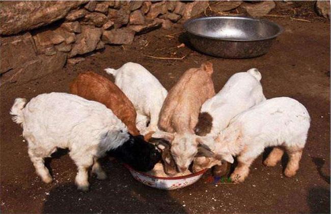 羔羊 怎样 安全越冬