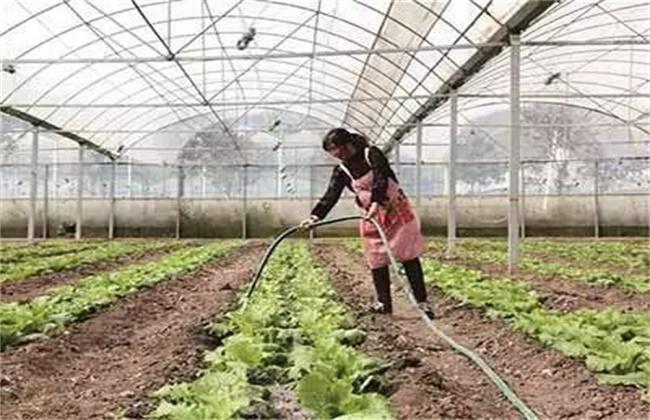 大棚蔬菜如何浇水