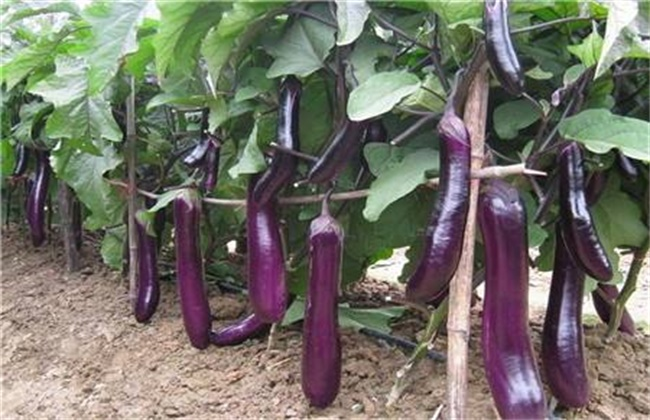 春季适合种植什么蔬菜