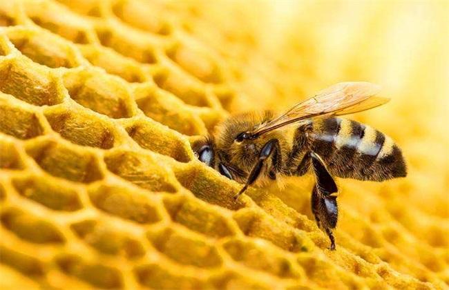 蜜蜂为什么会逃跑