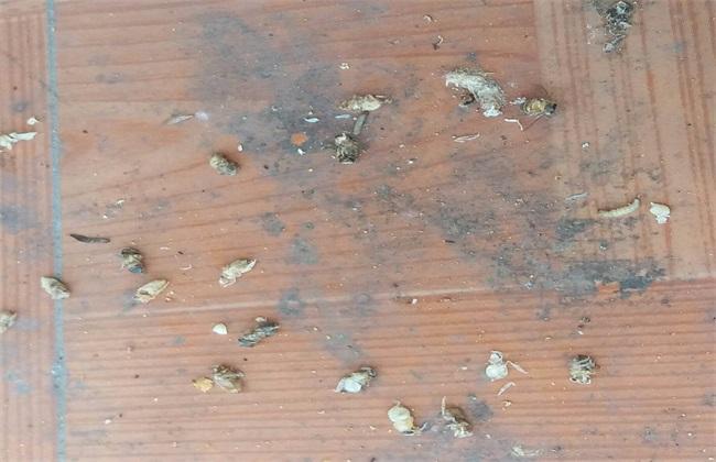 蜜蜂巢虫发病原因及防治