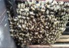 蜜蜂分群的原因