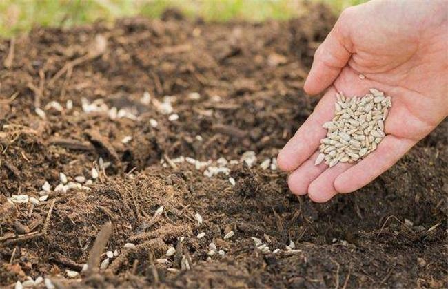 春耕 种植 注意事项