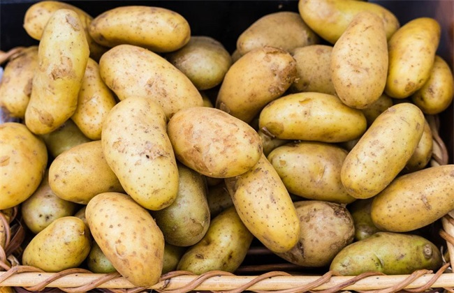 土豆价格多少钱一斤
