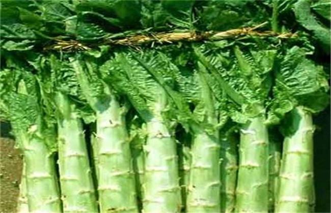 油麦菜和莴笋的区别