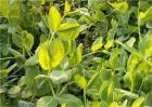 反季节蔬菜的施肥技术