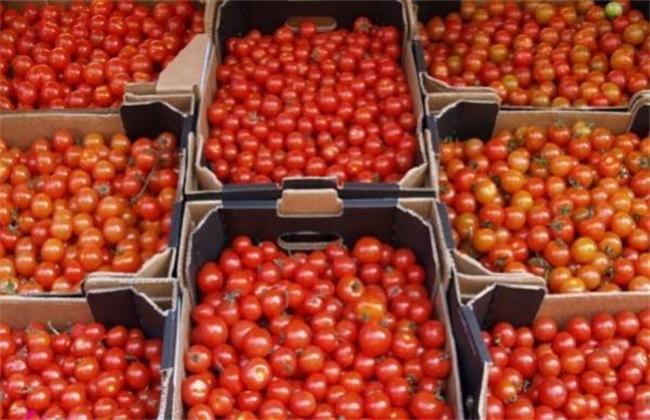 番茄 该怎么 贮藏保鲜